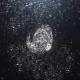 Bubble Splash Reveal