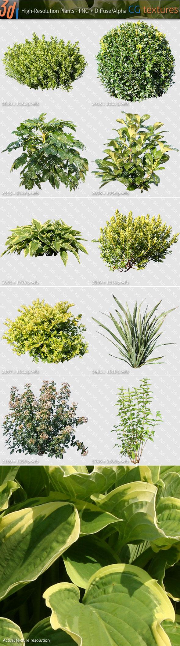 Plants Textures Hi-Res Collection 01