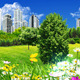 City and Green Meadow