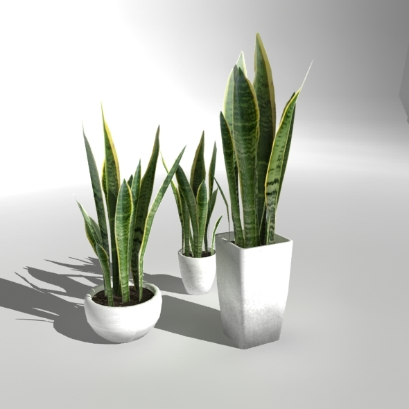 """Low-poly Plant """"Snake Plant"""""""