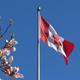 Canada Flag And Magnolia Flowers