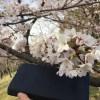 東京最大の花見スポット【小金井公園】に、ココマイスターの長財布とともに行って来ました(2017年4月5日)