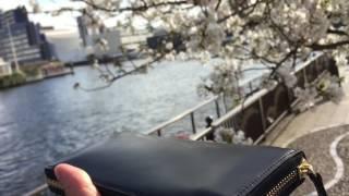 TYハーバー(天王洲アイル)近くの満開の桜と、ココマイスターの長財布を一緒に撮影