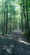 cycling along a narrow gauge forest train track - still dont know what that actually was