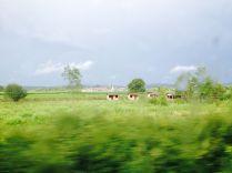 Across_Slavonia43