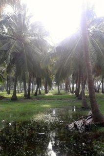 Kalpitiya_Anuradhapura027