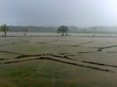 rice fields all flooded