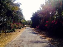 """driveway to """"Emerald Enclave"""""""