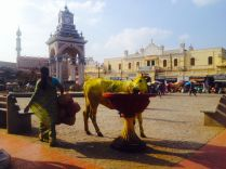 yellow cows all over