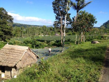 Bali-pt2-50