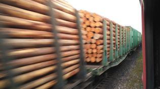 lots of wood leaving the Taiga