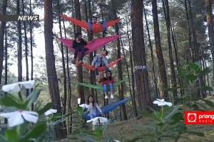 Santai di Atas Hammock Menikmati Tenangnya Hutan Pinus Batu Cakra