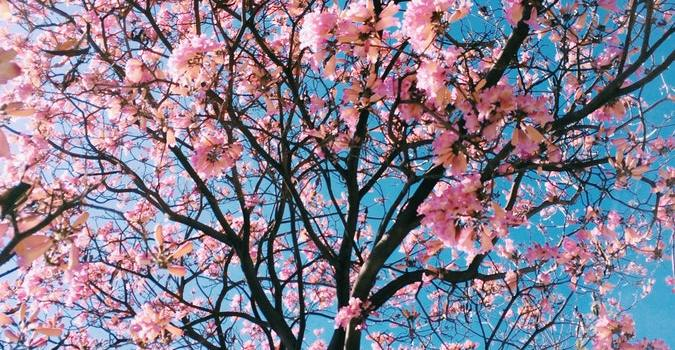 Cherry Blossom - Spring is here, and it's time for spring cleaning!