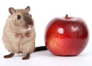 A mouse and an apple
