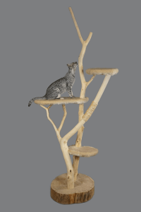 cat climbing a tree tower - one of the best home improvements for pets