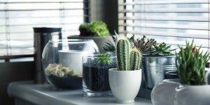 Plants inside.