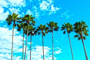 Palm trees and the blue sky.