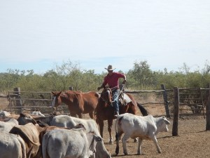 Cowboy who has changed his lifestyle after exploring the inspiring Montana ranch style home guide.