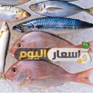 اسعار الاسماك فى مصر اليوم الثلاثاء 19-12-2017