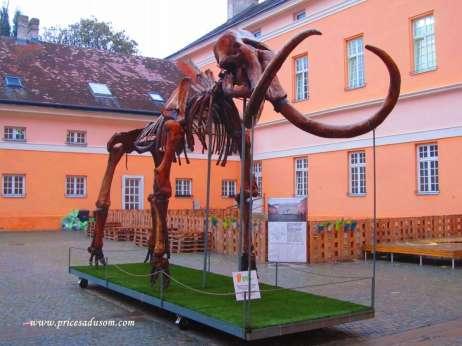 Kopija mamuta Kike u dvorištu Narodnog muzeja, a unutra je original