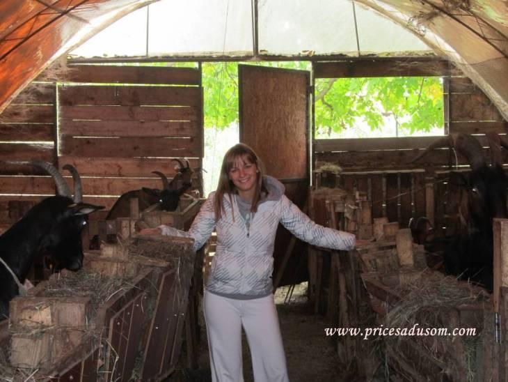 Jelena Maric Srbobran 5_1024x768