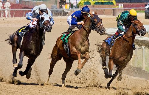 three-horse-race