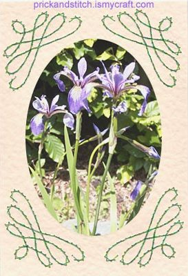 Corner scroll card with an iris picture.