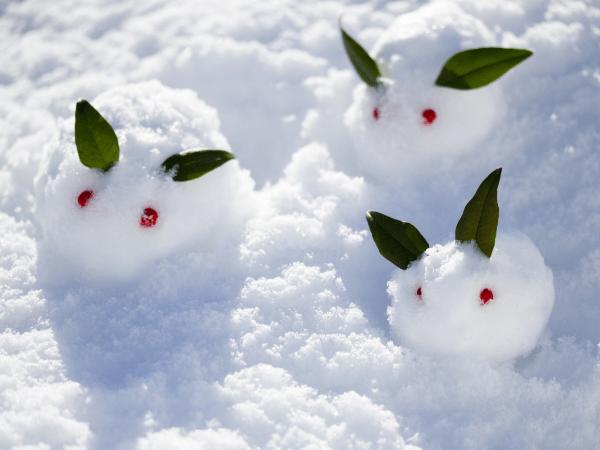 寒中見舞いの時期はいつからいつまで?年賀状や贈り物は?