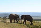 Aldo Elephant Park