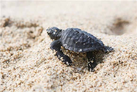 Uhićen zbog krijumčarenja 152 kornjače