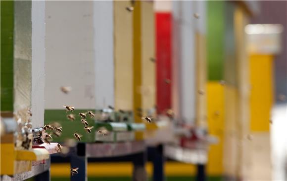 Ukrao košnice pčela i više desetaka kilograma meda