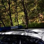 NA KRIŽEVAČKOM PODRUČJU Iz šume ukrao 10 metara drva bukve i graba