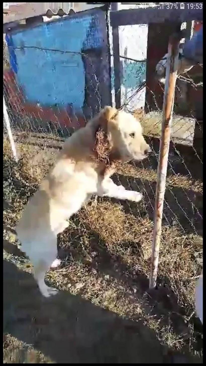 Djakovo-pas visio na ogradi-1-Udruga Djakovo FB