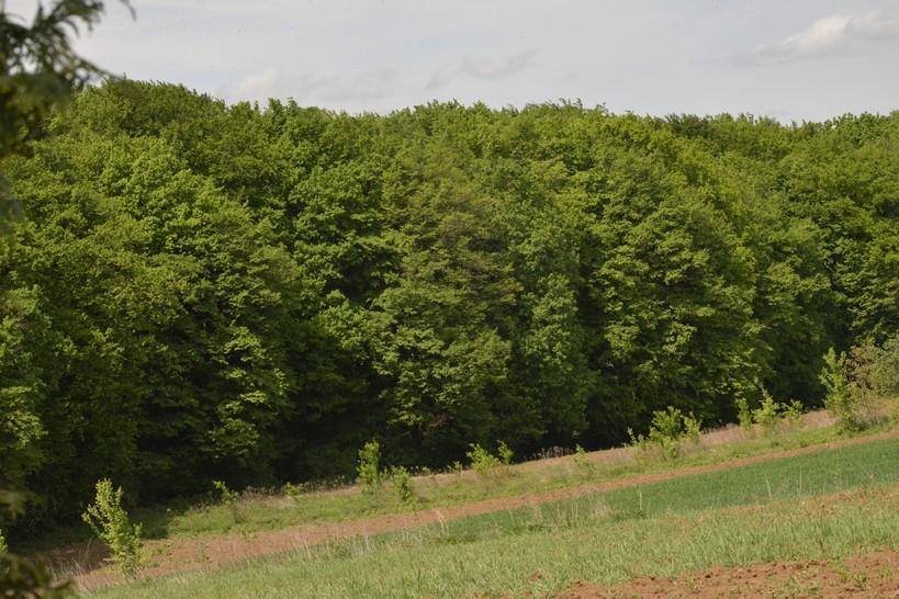"""U utorak tribina """"Što biste trebali znati o šumama, a nitko vam nije rekao"""" akademika Igora Anića"""
