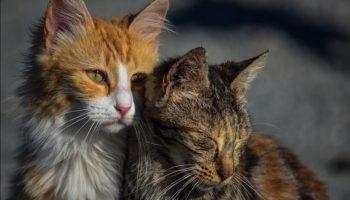 Od sada aplikacija koja otkriva trpi li vaša mačka neku bol