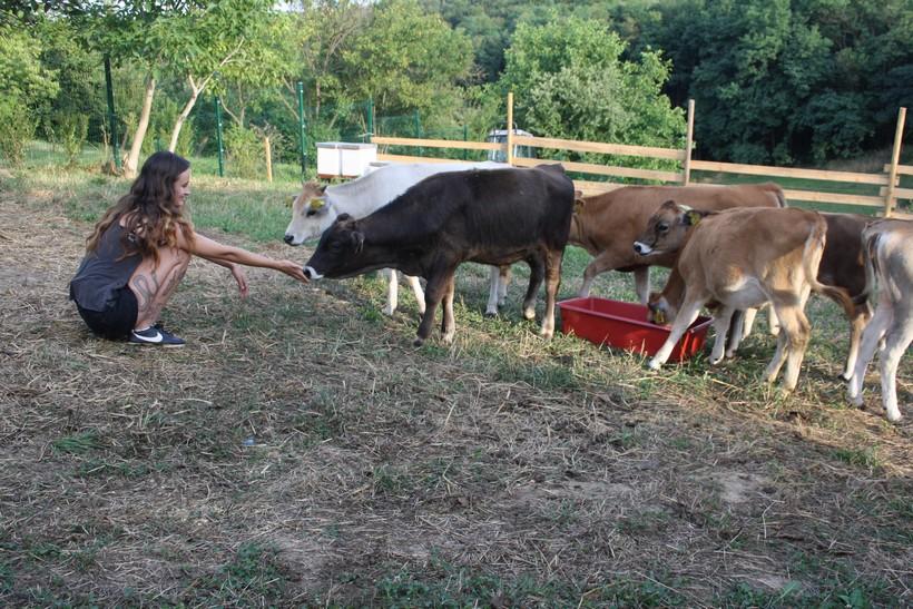 krave buše (4)