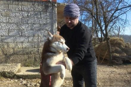 20200117152456677572 - Šest godina uzgaja energične polarne pse: Sibirski haskiji iz doline Sane
