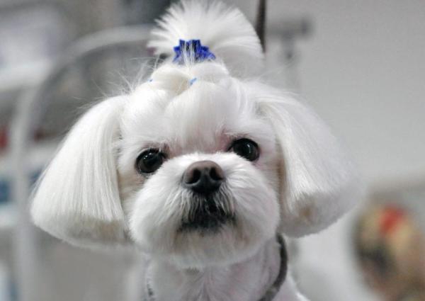 Картинки красивые с собаками (38 фото) | Приколист