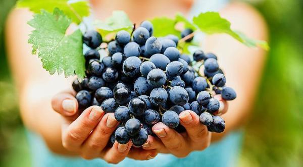 Картинки винограда (32 фото)   Приколист