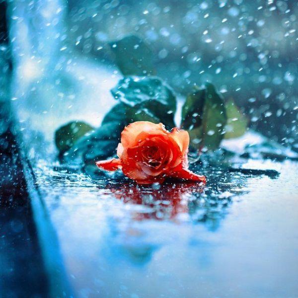 Красивые картинки на аву цветы » Скачать лучшие картинки ...