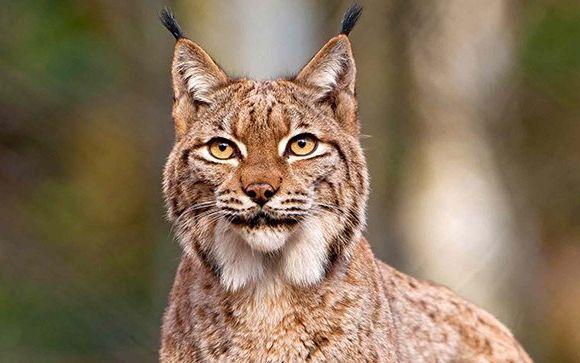 Смотреть фото животных бесплатно » Скачать лучшие картинки ...