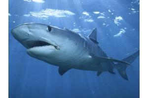 Акула подводный мир фото » Скачать лучшие картинки ...