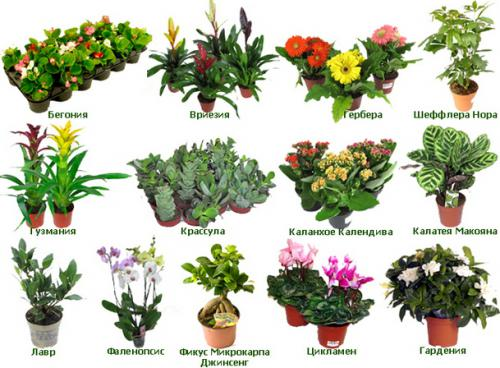 Комнатные Цветы И Растения Названия И Фото