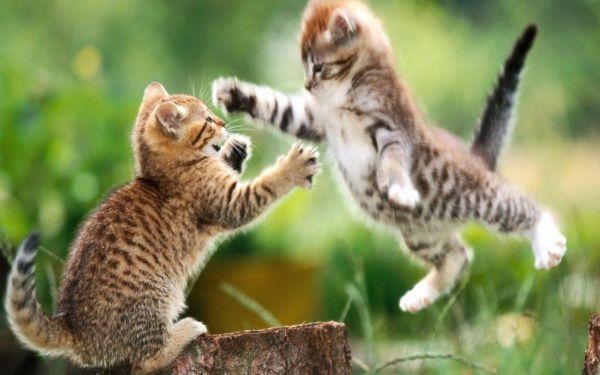 Видео приколы про кошек » Скачать лучшие картинки ...