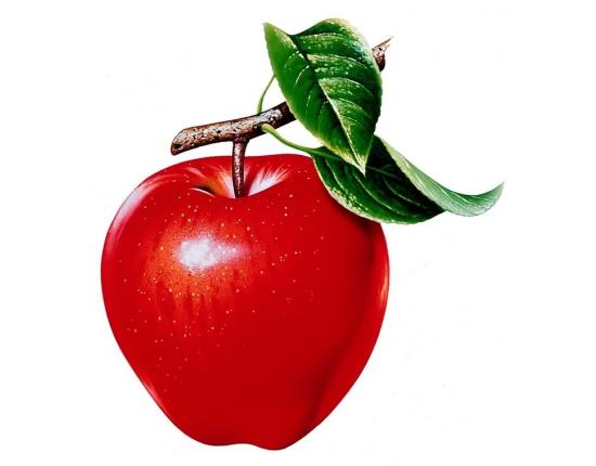Картинки овощей и фруктов цветные для детей » Скачать ...