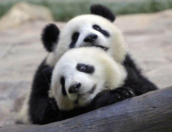 Животные фото смотреть онлайн » Скачать лучшие картинки ...