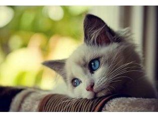 Смотреть картинки бесплатно про животных » Скачать лучшие ...