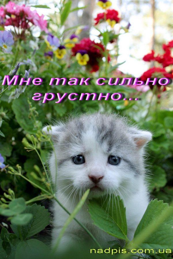 С днем россии картинки прикольные » Скачать лучшие ...