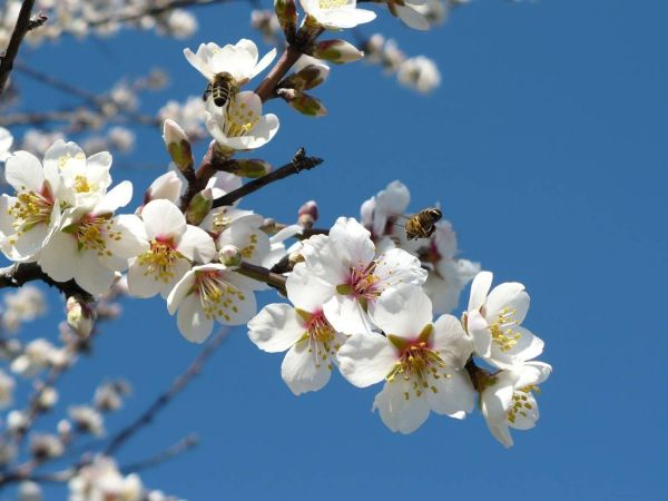 Ранняя весна обои на рабочий стол » Скачать лучшие ...
