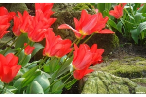 Цветы фото хорошего качества » Скачать лучшие картинки ...
